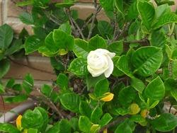 庭の花01-4