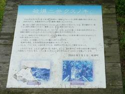 文化の森02-4
