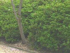 新戸町公園03