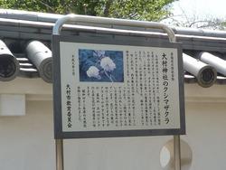 大村公園02-1-2