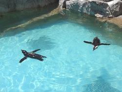 ペンギン水族館04-2