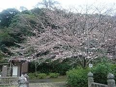 桜0318・05-6
