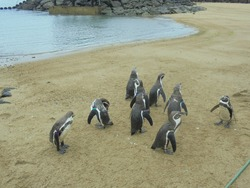 ペンギン水族館03-2