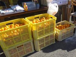 オレンジマルシェ02-6