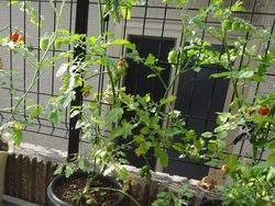 庭の花02-2