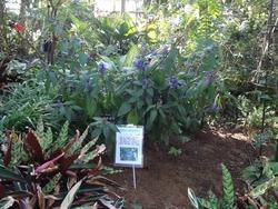 亜熱帯植物園03-2