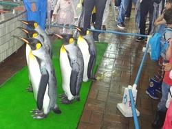 ペンギン水族館03-3