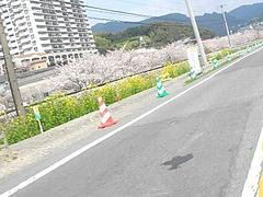 桜・高田01-2