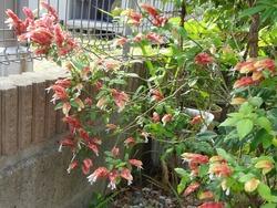庭の花01-2