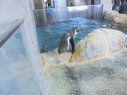 ペンギン水族館02-6