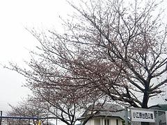 桜0318・02