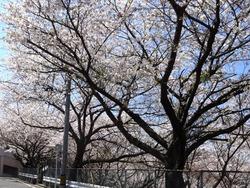 三川公園01-3