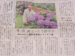 松里町あじさい園01-2