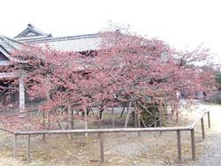 鍋島邸02-3