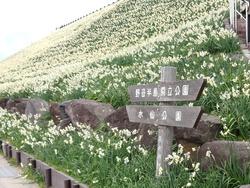 水仙まつり02-2