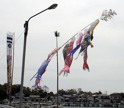 鯉のぼり03
