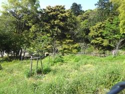 稲佐山03-2