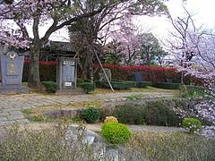 桜・原爆公園03