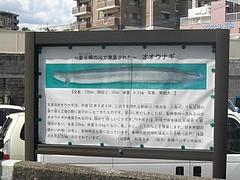 弁慶岩02-2