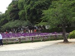 大村公園01