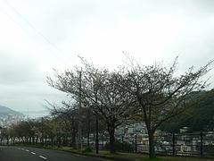 桜0318・03-2