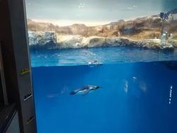 ペンギン水族館02-8