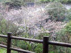 西山ダム下流公園01-4