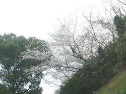 護国神社01