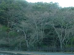 桜03-3