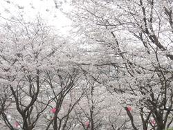 中尾城公園02-2
