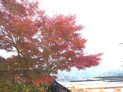 庭の紅葉01-3