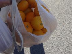 オレンジマルシェ02-8