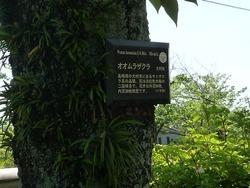 大村公園04