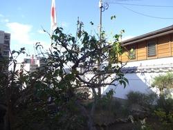 八坂神社01-6