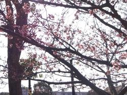 久原公園01-7
