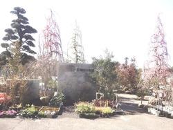 稲佐山・植木市01-2