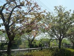 大村公園04-4
