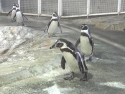 ペンギン水族館03-5