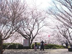 中尾城公園01-5