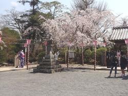 大村公園03-5