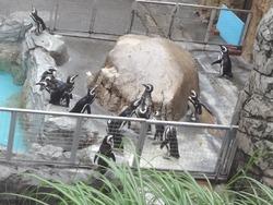 ペンギン水族館02-3