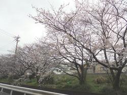 桜02-6