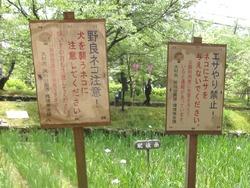 大村公園01-6