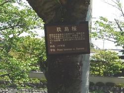 大村公園04-3