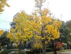中町公園01-2