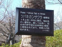 大村公園01-1