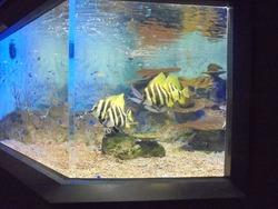 ペンギン水族館02-4
