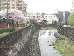 浜町・桜06-2