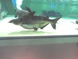 ペンギン水族館03-8