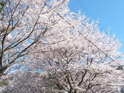 三川公園01-5